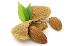 Tasty almond Stock Photography