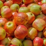 Tasty apples on a market Stock Photography