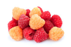 Tasty and beautiful raspberry Royalty Free Stock Image