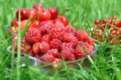 Tasty Berries Stock Photo