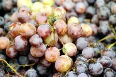 Tasty big dark grapes Stock Photography