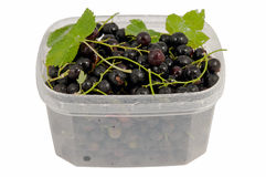 Tasty black currant in the plastic сontainer Royalty Free Stock Photography