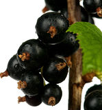 Tasty black currants Royalty Free Stock Images