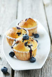 Tasty blueberry muffins Royalty Free Stock Image