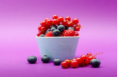 Tasty blueberry, redcurrant and raspberries Stock Photos