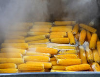 Tasty boiled corn Royalty Free Stock Photo