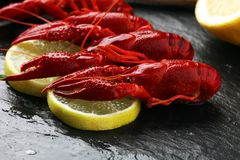 tasty boiled crawfish closeup on stone table, seafood dinner, no Stock Photography