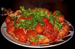 Tasty boiled crawfish on a round a plate. Crayfish has traditionally been considered one of the best snacks for beer. Closeup. Selective focus royalty free stock photography