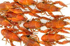 Tasty, boiled crawfishes of red color on a white background royalty free stock photos