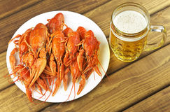 Tasty boiled crayfish Royalty Free Stock Photography