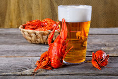 Tasty boiled crayfishes and beer Stock Photos