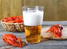 Tasty boiled crayfishes and beer Royalty Free Stock Image