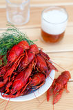 Tasty boiled crayfishes and beer on old table Royalty Free Stock Photography