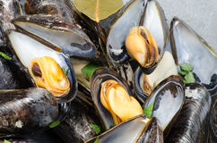 Tasty boiled mussels Royalty Free Stock Image