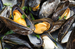 Tasty boiled mussels Royalty Free Stock Photography