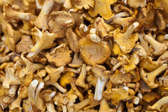 Tasty chanterelles cutted Stock Photo