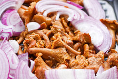 Tasty chanterelles, roasted onion, in a pan Royalty Free Stock Image