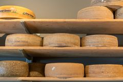 Tasty cheese on shelves in store stock photos