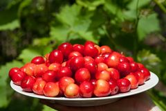 Tasty cherries Stock Photo