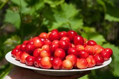 Tasty cherries Stock Photos