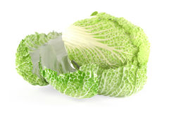 Tasty Chinese cabbage  Stock Images
