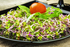 Tasty chinise rose sprouts Stock Photography