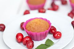 Tasty chocolate muffins. Tasty fresh chocolate muffins with ripe berries of cherry royalty free stock images