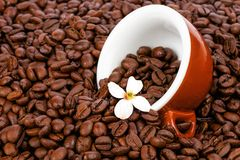 Tasty coffee. Fresh roasted coffee beans with original Italian cappuccino cup and white blossom Royalty Free Stock Photos