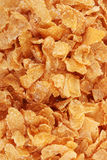 Tasty cornflakes Stock Images