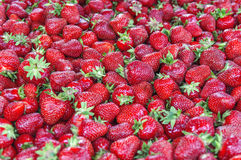 Tasty and delicious red strawberry on market on sunny day. Close Royalty Free Stock Photography