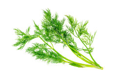 Tasty dill herb garnish isolated on white. Detailed Stock Photography