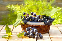 Tasty and fresh grape Royalty Free Stock Photography