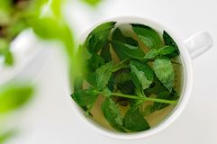Tasty fresh herbal tea with green peppermint and basil essential oils. Green tea in a white cup royalty free stock images