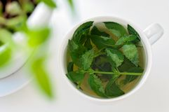 Tasty fresh herbal tea with green peppermint and basil essential oils. Green tea in a white cup stock photo