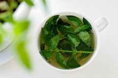 Tasty fresh herbal tea with green peppermint and basil essential oils. Green tea in a white cup stock images