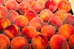 Tasty fresh juicy peaches Stock Image