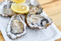 Tasty fresh oysters with sliced juicy lemon on plate. Aphrodisiac food for increasing sexual desire. Street kitchen. Tasty fresh oysters with sliced juicy lemon royalty free stock photo