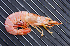 Tasty fresh seafood Royalty Free Stock Images