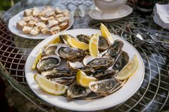 Oyster on a glass plate on a glass table outside the street, lunch or brunch. Tasty good looking meal for short lunch in French style in sunny summer Royalty Free Stock Images