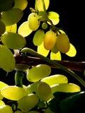 Tasty Grape Stock Photo