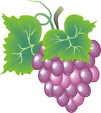 Tasty grapes Royalty Free Stock Image