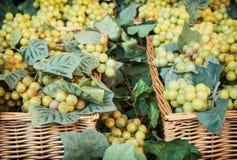 Tasty grapes Royalty Free Stock Photo