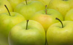 Tasty green appetizing fresh apples closeup. Many Tasty green appetizing fresh apples closeup Stock Images