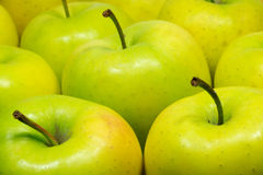 Tasty green appetizing fresh apples closeup Royalty Free Stock Photos
