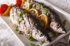 Tasty grilled saury with lemon on a plate close-up. Horizontal. Tasty grilled saury with lemon and chives on a plate close-up. horizontal Royalty Free Stock Photo