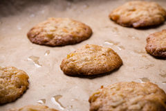 Tasty homemade oat cookies on baking tray. Royalty Free Stock Photo