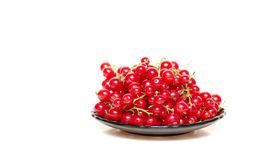 Tasty and juicy currants in brown saucer. Stock Photography