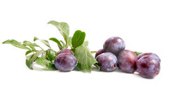 Tasty,juicy plums on a white. Stock Images