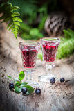 Tasty liqueur made of alcohol and blueberries in forest Royalty Free Stock Image