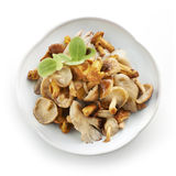 Tasty mix of mushrooms Royalty Free Stock Image